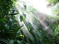 Tropische Wälder schützen die biologische Vielfalt und das Klima…