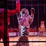 China verbietet tierische Zirkusnummern VIER PFOTEN fordert das Aus von Wildtierdressuren auch für Deutschland