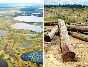 Permafrost, Regenwald: CO2 vor Freisetzung (Fotos: Flickr/Mukhrino,Greenpeace)