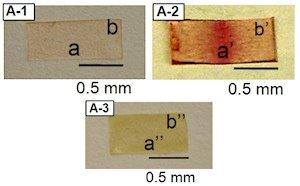 Neuartiges Plastik repariert sich im Sonnenlicht – Material signalisiert Schäden durch Verfärbung