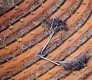 Palmöl aus Torfböden bedroht Weltklima – Indonesische Plantagen zunehmend auf Kohlenstoff-Bunkern