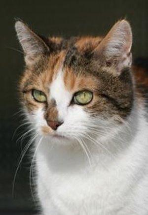 Auslöser für Katzenallergien erforscht – Hoffnung auf neue Medikamente zur Prävention