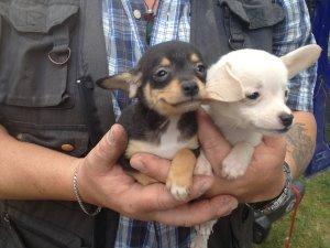 """Am Sonntag ist der """"Tag des Hundes"""" – VIER PFOTEN warnt vor illegalem Welpenhandel"""