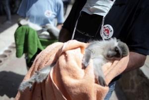 Happy End für Gaza Zootiere aus Khan Younis – Nach erfolgreicher VIER PFOTEN Rettungsmission: alle Tiere sicher in neuem Zuhause
