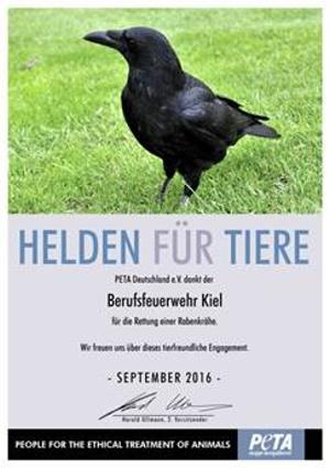 """Rabenkrähe gerettet – PETA ernennt Berufsfeuerwehr Kiel zu """"Helden für Tiere"""""""
