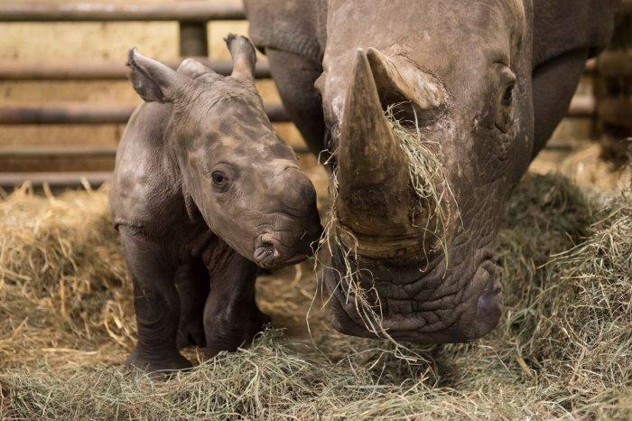 Foto: (c) Serengeti-Park Hodenhagen