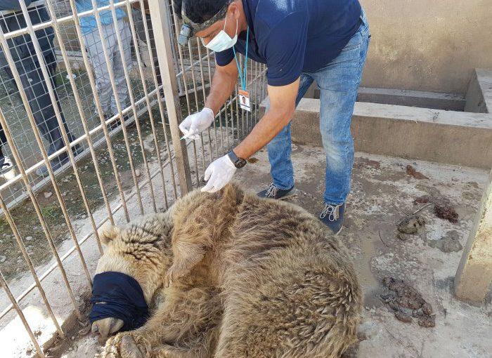 Mission im Irak: VIER PFOTEN hilft verbliebenen Zootieren im vom Krieg verwüsteten Mossul